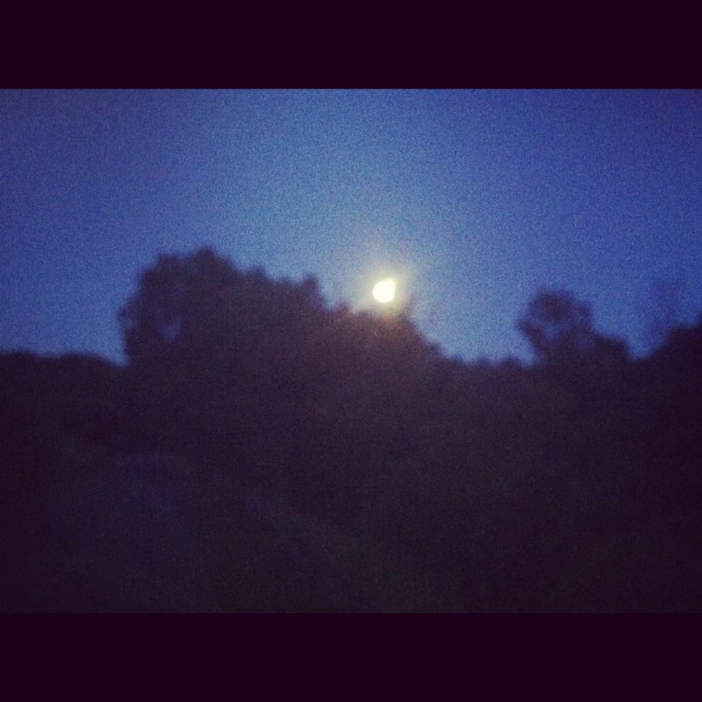 Moon over Meadow