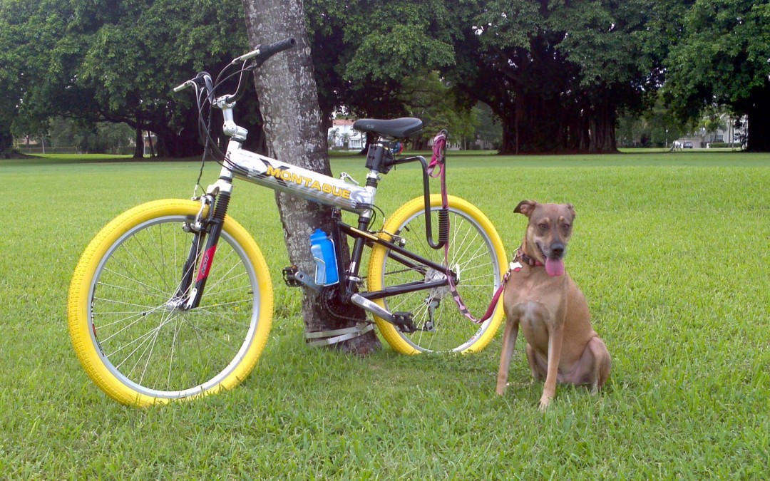 Are you a bike-riding dog lover?