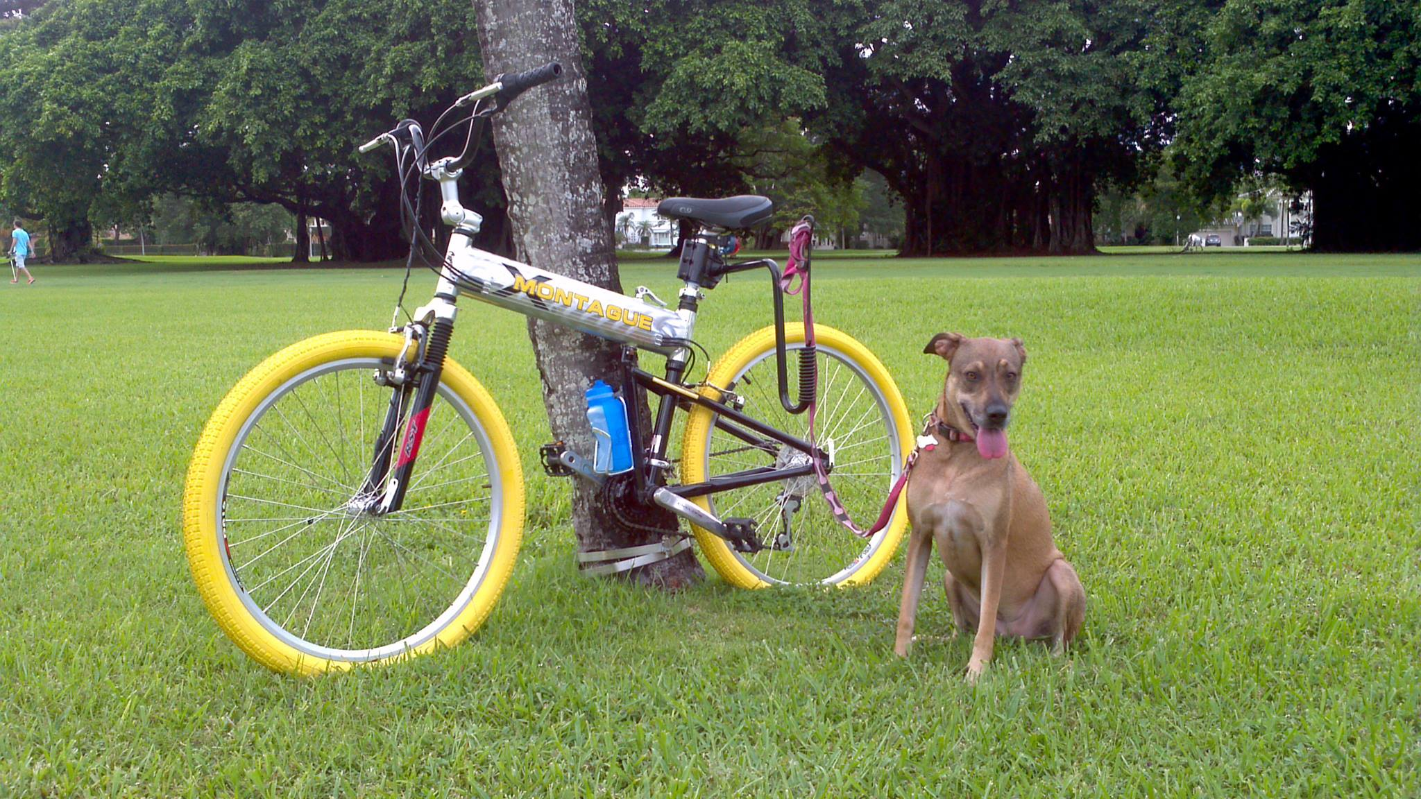 Are You A Bike Riding Dog Lover Montague Bikes