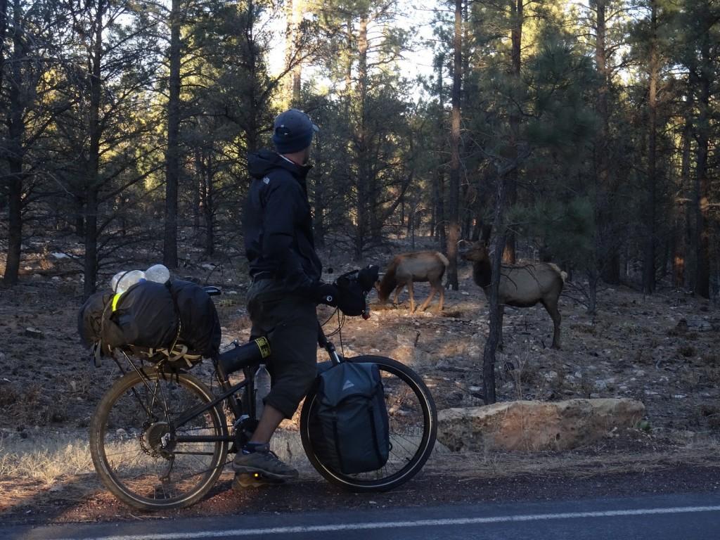 State Parks AZ Wildlife